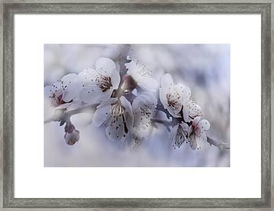 Tenderness Of Spring Framed Print