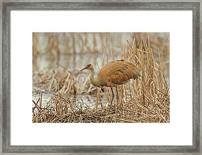 Tending The Nest Framed Print by Natural Focal Point Photography