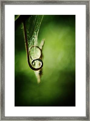 Tendril And Web Framed Print