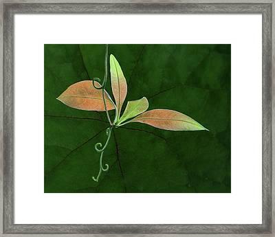 Tendril - Leaves Framed Print