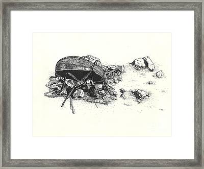 Darkling Beetle Framed Print