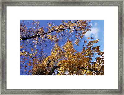 Tennessee Tree 1 Framed Print