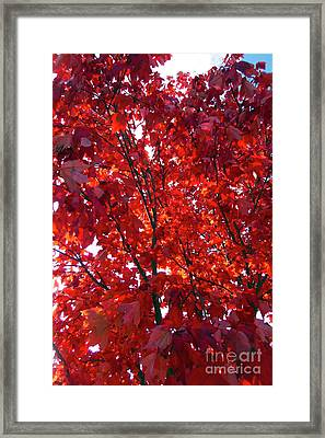 Tennessee Trees 3 Framed Print