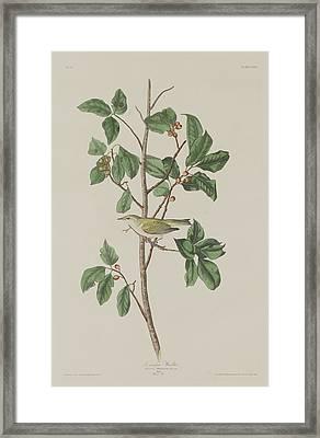Tennessee Warbler Framed Print