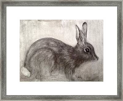 Tennessee Wildlife Cottontail Rabbit Framed Print