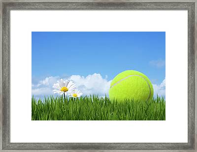 Tennis Ball Framed Print by Andrew Dernie