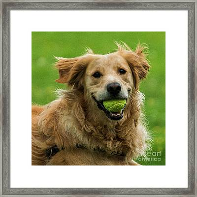 Tennis Is On ..wanna Play? Framed Print