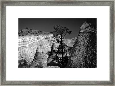 Tent Rocks And Pine Tree Framed Print