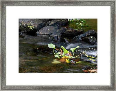Tenuous Framed Print by Nicholas Blackwell