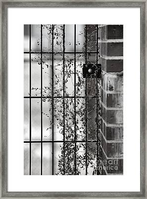 Tenuous Tentrils 0811 Framed Print by Ken DePue