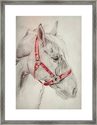 Tequila Sketch Framed Print by JAMART Photography