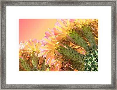 Tequila Sunrise Framed Print by Veronika Countryman