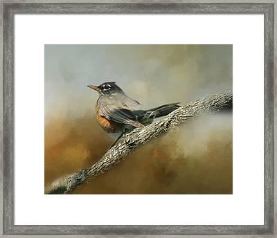 Teressia's Spring Robin  Framed Print