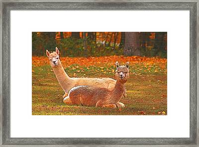 Teribus And Major Framed Print by Allen Beatty
