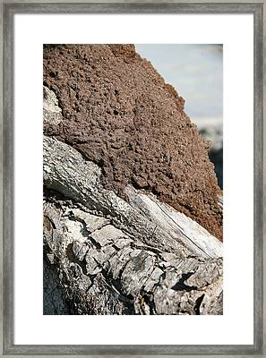 Termite Nest Framed Print by Steve Madore