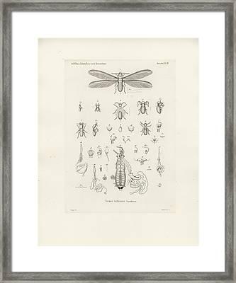 Termites, Macrotermes Bellicosus Framed Print