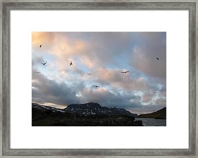 Terns At Midnight Framed Print by Sidsel Genee