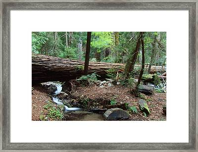 Terrace Creek - Ventana Wilderness Framed Print by Soli Deo Gloria Wilderness And Wildlife Photography