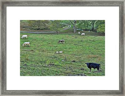 Terraced Hill Framed Print by Jan Amiss Photography