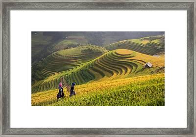 Terraced Rice Field Inside Fog And Morning Ray In Mu Cang Chai, Framed Print by Anek Suwannaphoom