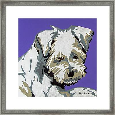 Terrier Mix Framed Print by Slade Roberts