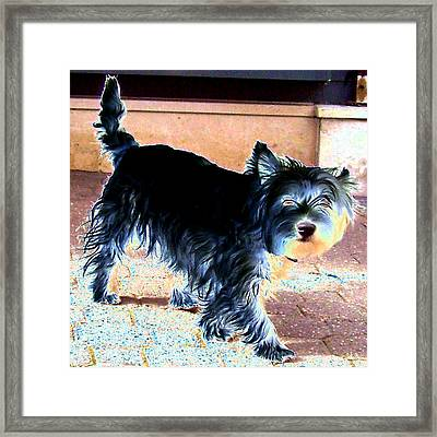 Terrier No. 01 Framed Print