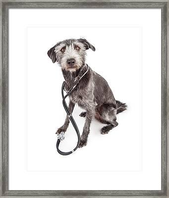 Terrier Veterinary Dog Wearing Stethoscope Framed Print