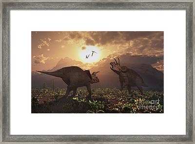 Territorial Confrontation Between Two Framed Print