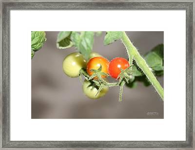 Terry Chomatos  Framed Print