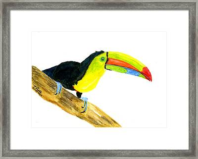 Terry Toucan Framed Print