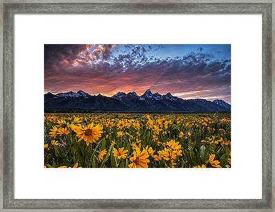 Tetons And Wildflowers At Sunset Framed Print