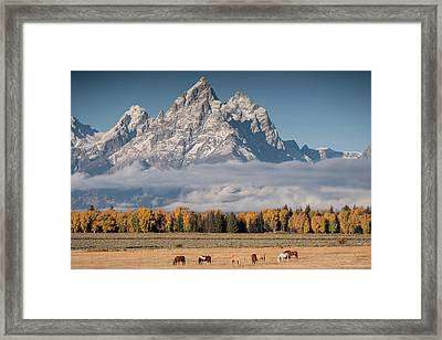 Framed Print featuring the photograph Teton Horses by Wesley Aston