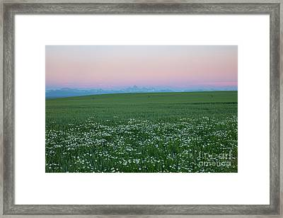 Tetons With Daisies Framed Print