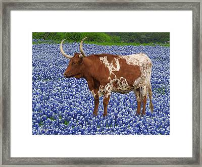 Da227 Tex And The Bluebonnets Daniel Adams Framed Print