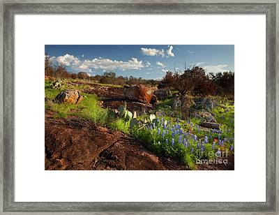 Texas Blue Bonnets And Cactus Framed Print by Keith Kapple