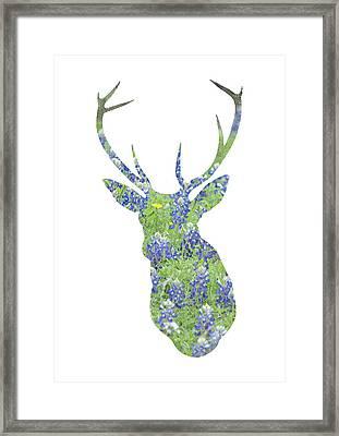 Texas Bluebonnet Deer Framed Print by Renee Hong
