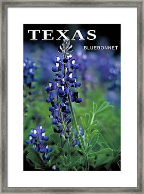 Framed Print featuring the mixed media Texas Bluebonnet State Flower by Daniel Hagerman