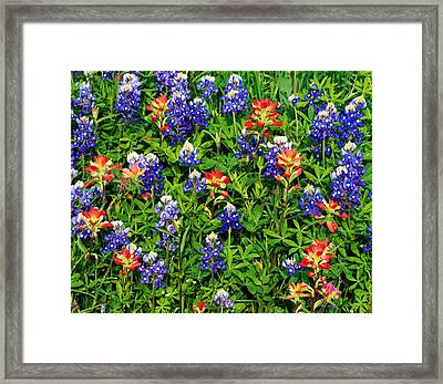 Texas Bluebonnets And Indian Paintbrush Framed Print by Panoramic Images