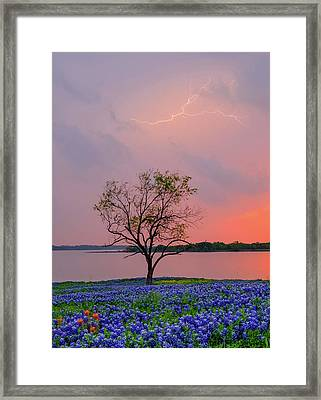 Texas Bluebonnets And Lightning Framed Print