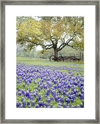 Texas Bluebonnets And Rust Framed Print by Debbie Karnes