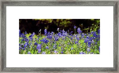 Texas Bluebonnets IIi Framed Print by Greg Reed