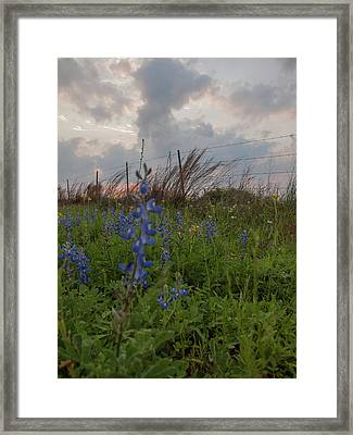 Texas Coastal Prairie Wildflower Sunset Framed Print