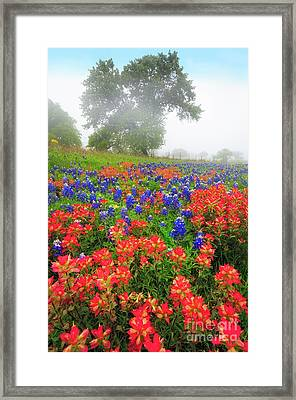 Texas Country Framed Print by Inge Johnsson