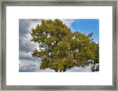 Texas Day On Display Framed Print by Ray Shrewsberry