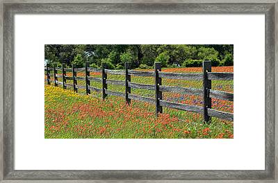 Texas Fence And Wildflowers - Painterly Framed Print by Stephen Stookey
