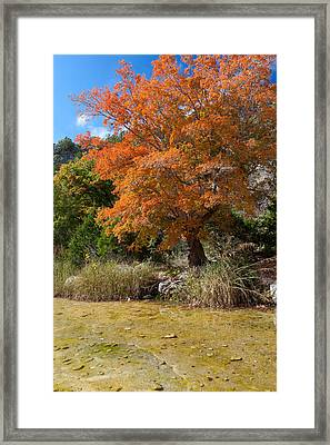 Lost Maples Autumn Framed Print by Mike Brymer