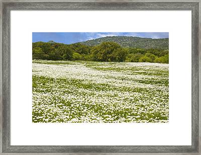 Texas Hill Country Spring 2 Framed Print by Paul Huchton