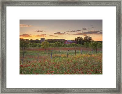 Texas Hill Country Wildflowers At Sunset 3 Framed Print by Rob Greebon