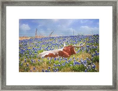 Texas Is Longhorns And Bluebonnets Framed Print by David and Carol Kelly