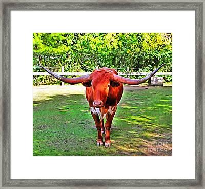 Texas Longhorn 2 Framed Print by Nishanth Gopinathan